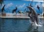 дельфинарий в Коктебель, Крым